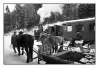 Parní lokomotiva 310.0134 při natáčení filmu Sněžná noc v zastávce Kryštofovo Údolí dne 19.1.2009. Foto Miloslav Nečas(46)
